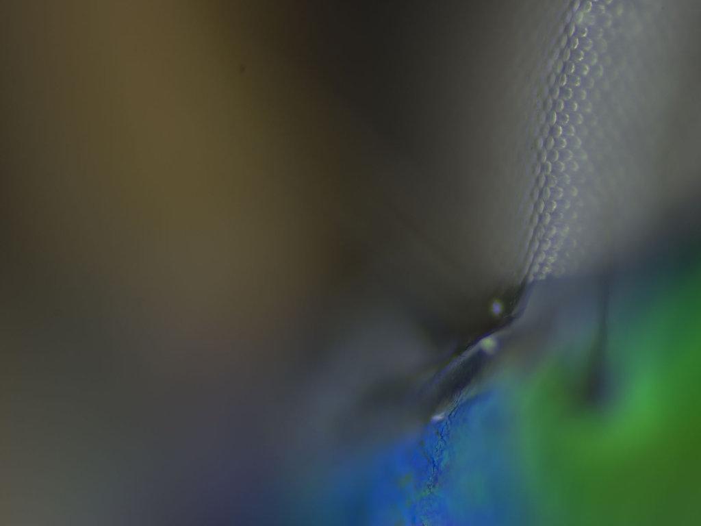 Detail Tiefenschärfe