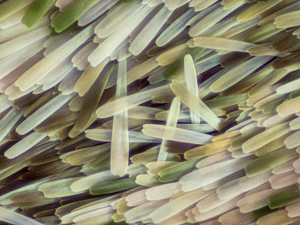 ol-09-oleander-229B-1-30-2led-1kl-0-0012.jpg